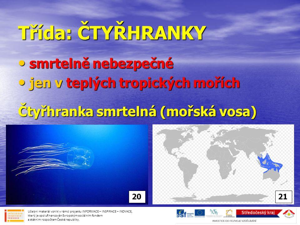 Třída: ČTYŘHRANKY smrtelně nebezpečné jen v teplých tropických mořích