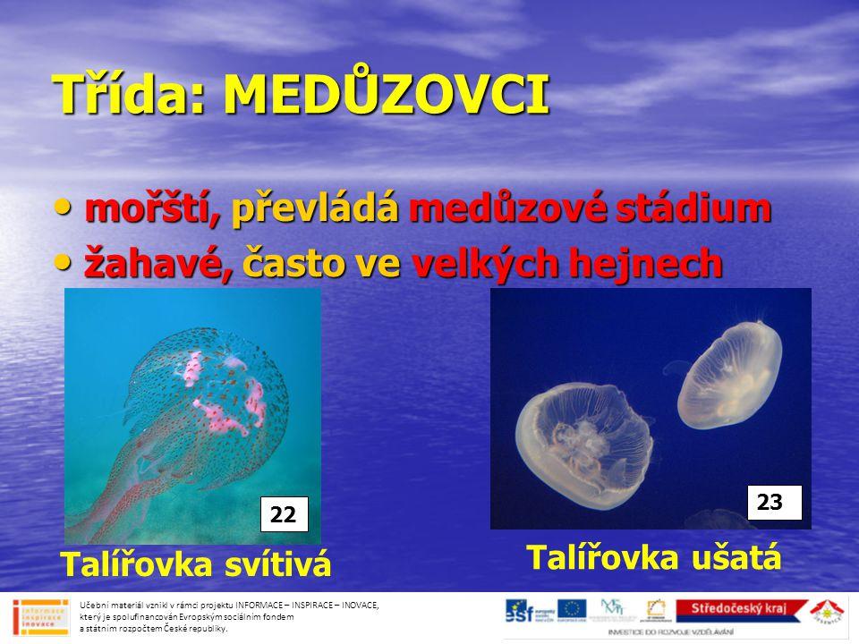 Třída: MEDŮZOVCI mořští, převládá medůzové stádium