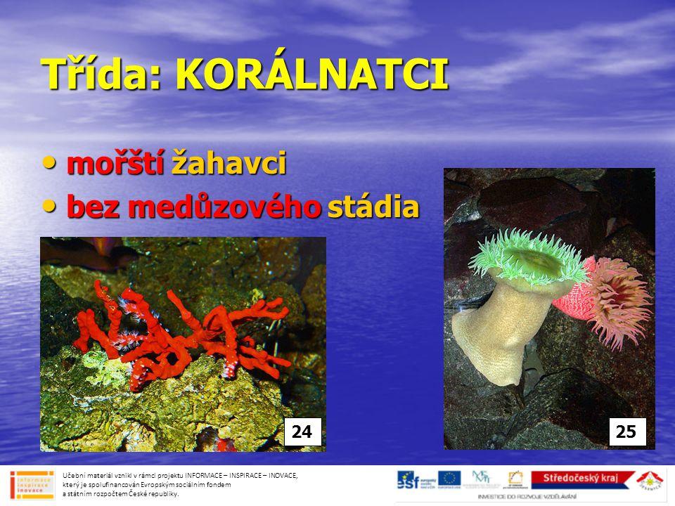 Třída: KORÁLNATCI mořští žahavci bez medůzového stádia 24 25