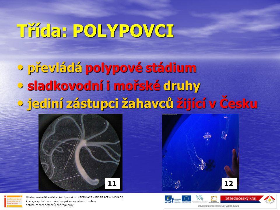 Třída: POLYPOVCI převládá polypové stádium sladkovodní i mořské druhy