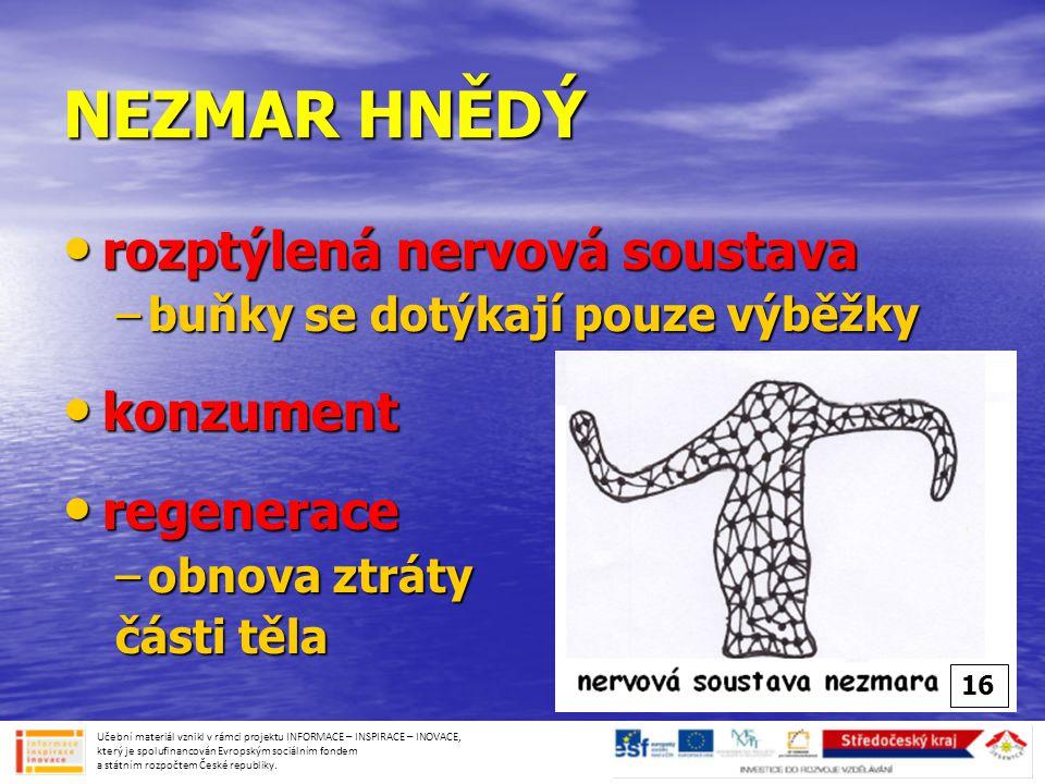 NEZMAR HNĚDÝ rozptýlená nervová soustava konzument regenerace