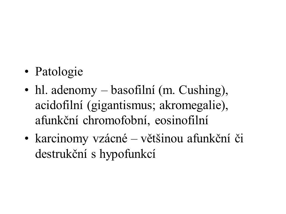 Patologie hl. adenomy – basofilní (m. Cushing), acidofilní (gigantismus; akromegalie), afunkční chromofobní, eosinofilní.