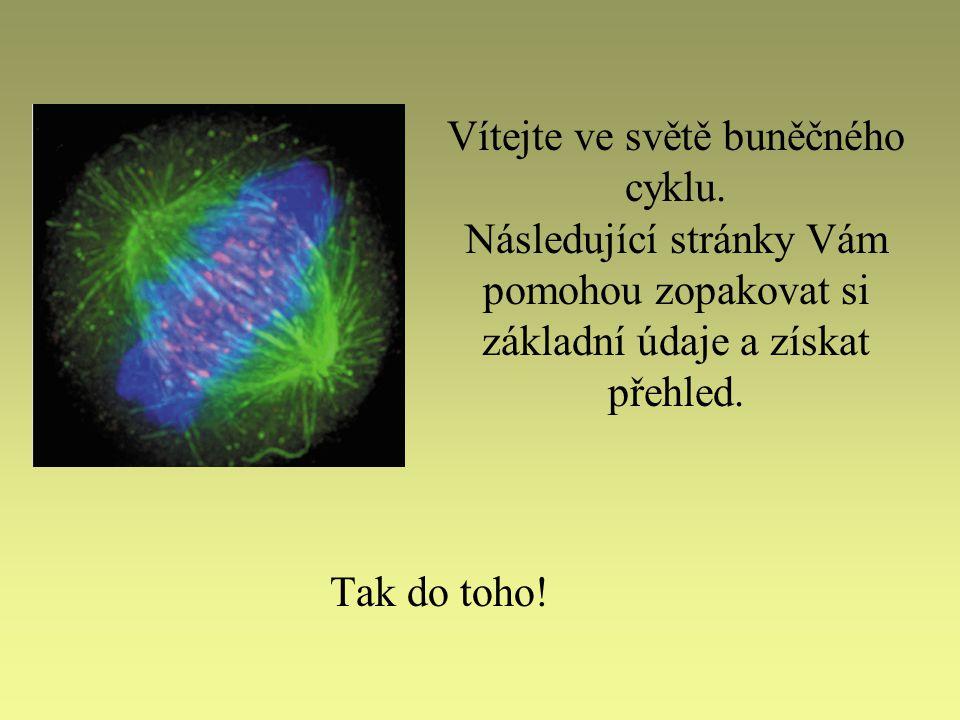 Vítejte ve světě buněčného cyklu