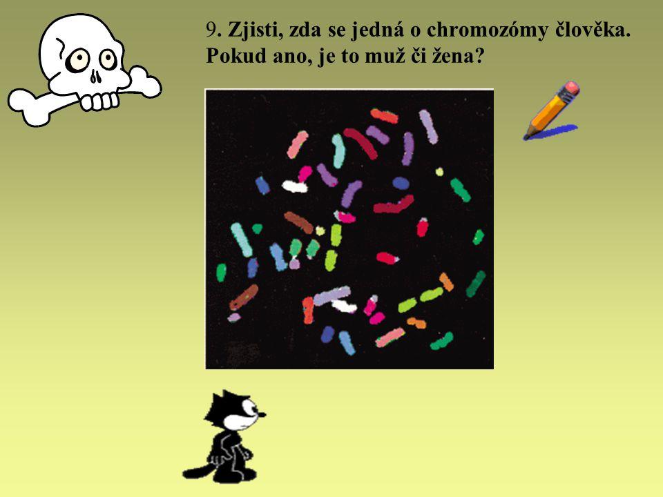 9. Zjisti, zda se jedná o chromozómy člověka