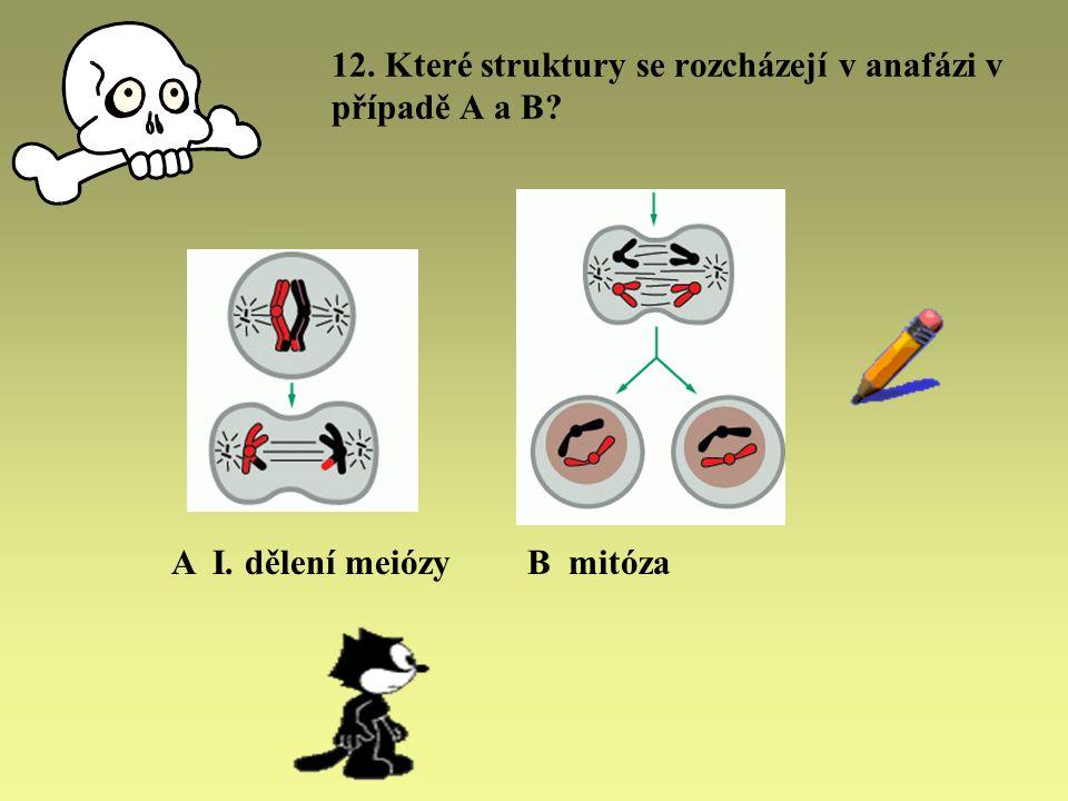 12. Které struktury se rozcházejí v anafázi v případě A a B