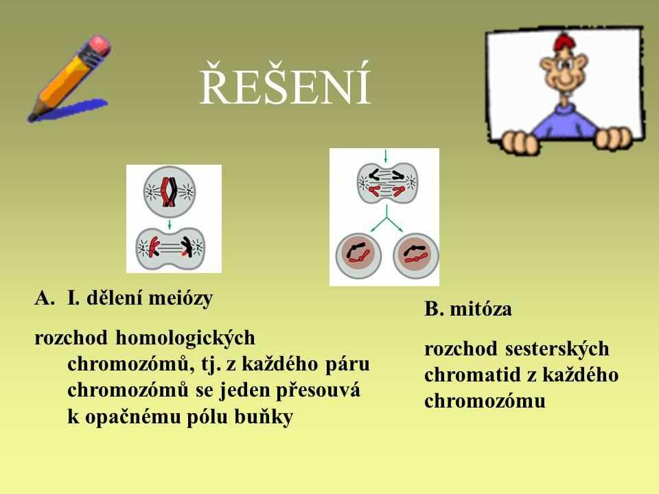 ŘEŠENÍ I. dělení meiózy. rozchod homologických chromozómů, tj. z každého páru chromozómů se jeden přesouvá k opačnému pólu buňky.