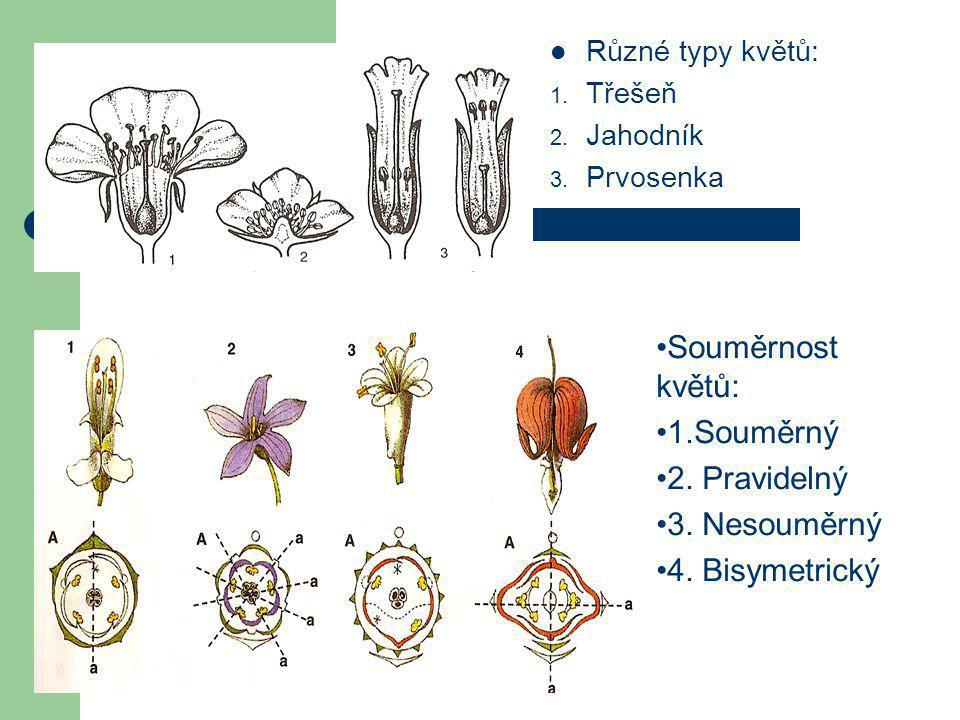 Souměrnost květů: 1.Souměrný 2. Pravidelný 3. Nesouměrný