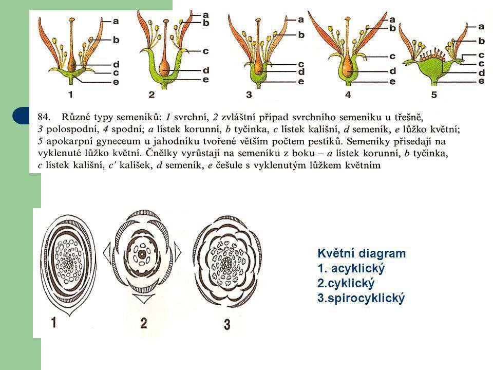 Různé typy semeníků Květní diagram 1. acyklický 2.cyklický