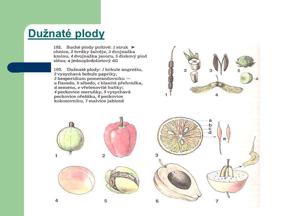 Dužnaté plody