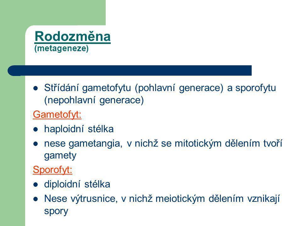 Rodozměna (metageneze)