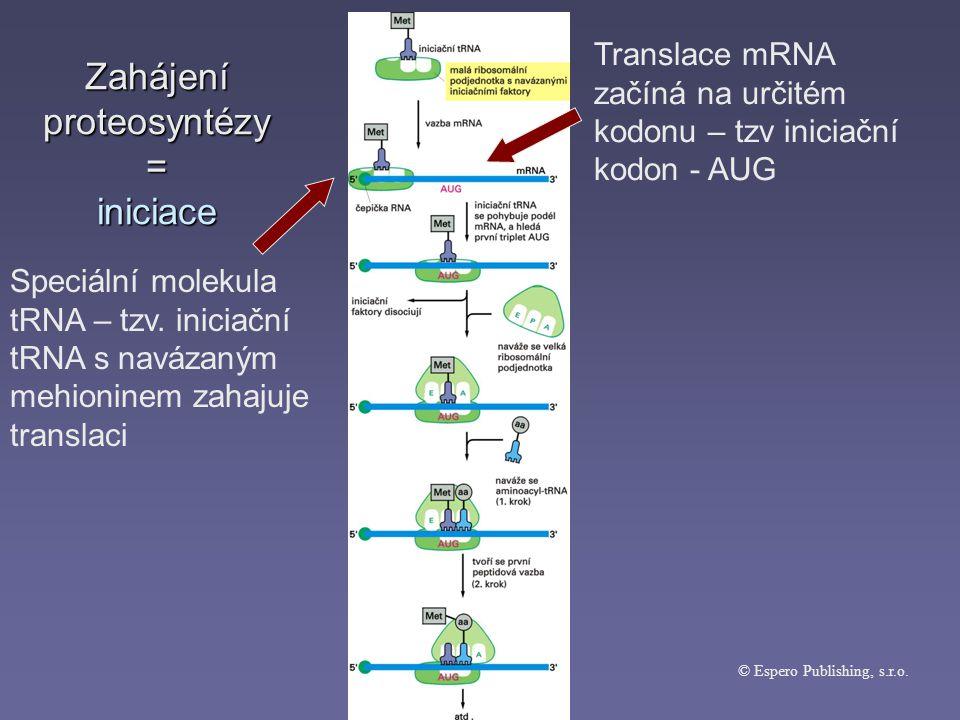 Zahájení proteosyntézy = iniciace