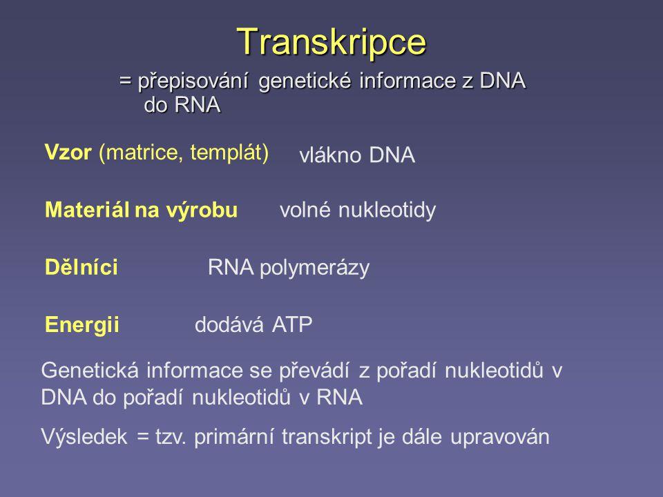 Transkripce = přepisování genetické informace z DNA do RNA