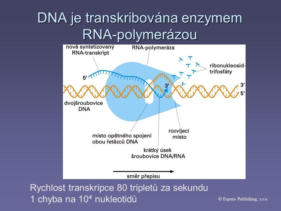 DNA je transkribována enzymem RNA-polymerázou