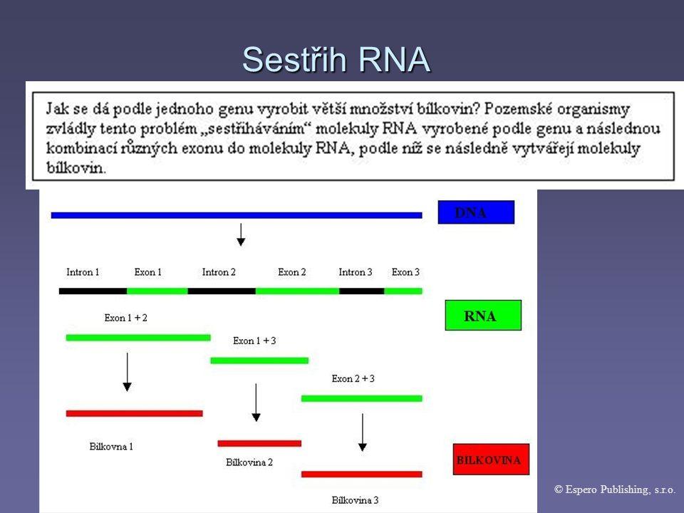 Sestřih RNA © Espero Publishing, s.r.o.