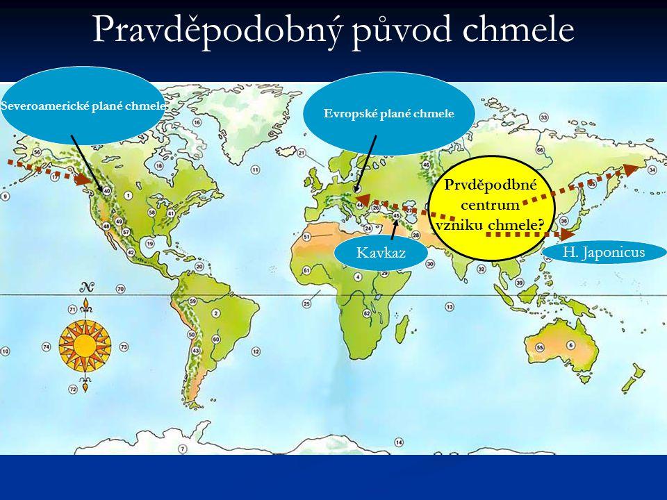Severoamerické plané chmele Prvděpodbné centrum vzniku chmele
