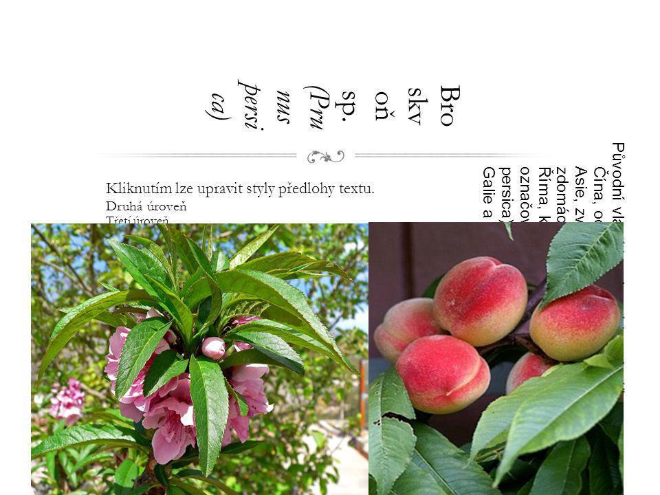 Broskvoň sp. (Prunus persica)