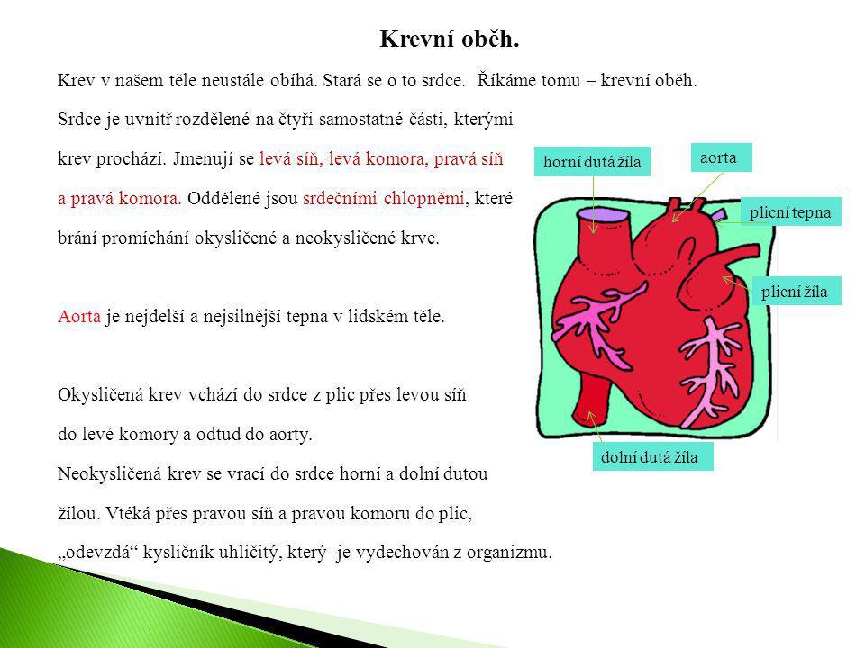 Krevní oběh. Krev v našem těle neustále obíhá. Stará se o to srdce. Říkáme tomu – krevní oběh.