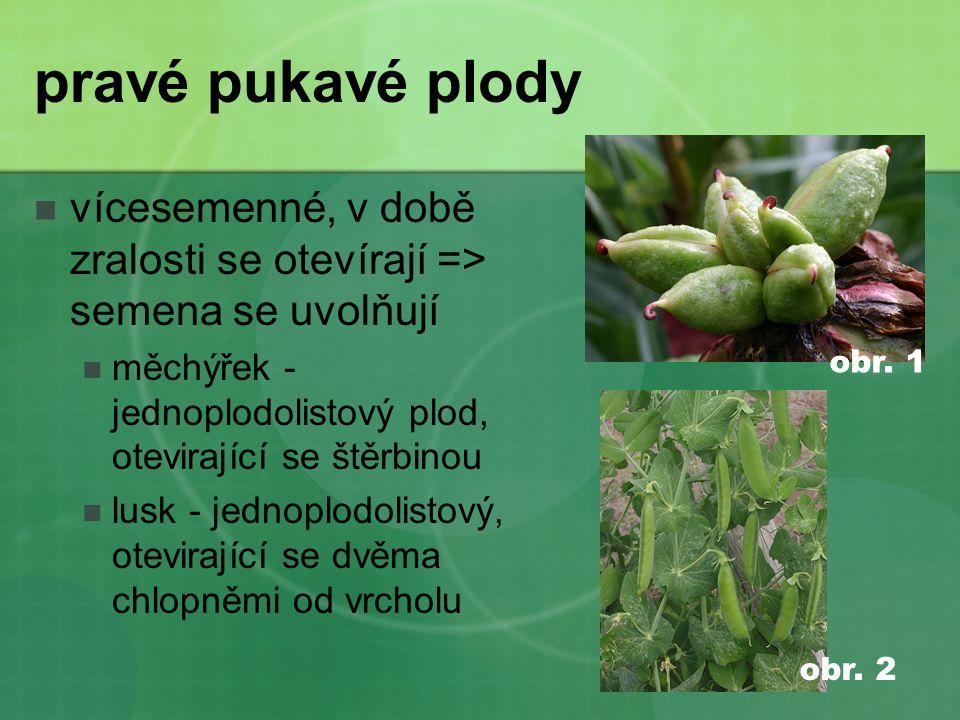 pravé pukavé plody vícesemenné, v době zralosti se otevírají => semena se uvolňují. měchýřek - jednoplodolistový plod, otevirající se štěrbinou.