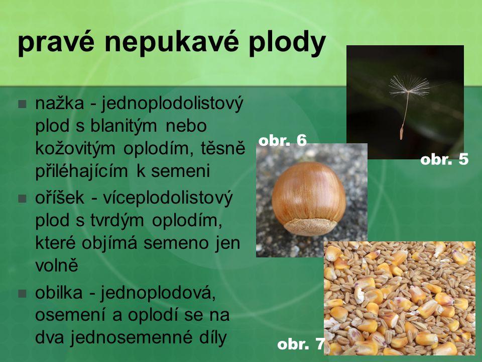 pravé nepukavé plody nažka - jednoplodolistový plod s blanitým nebo kožovitým oplodím, těsně přiléhajícím k semeni.