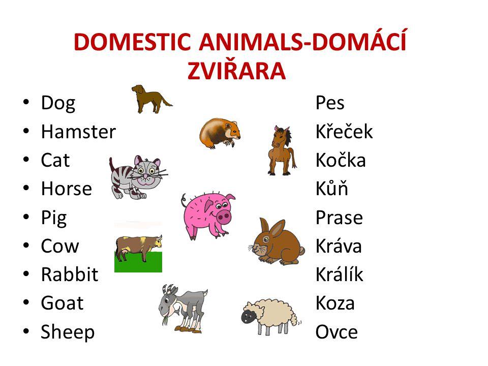DOMESTIC ANIMALS-DOMÁCÍ ZVIŘARA