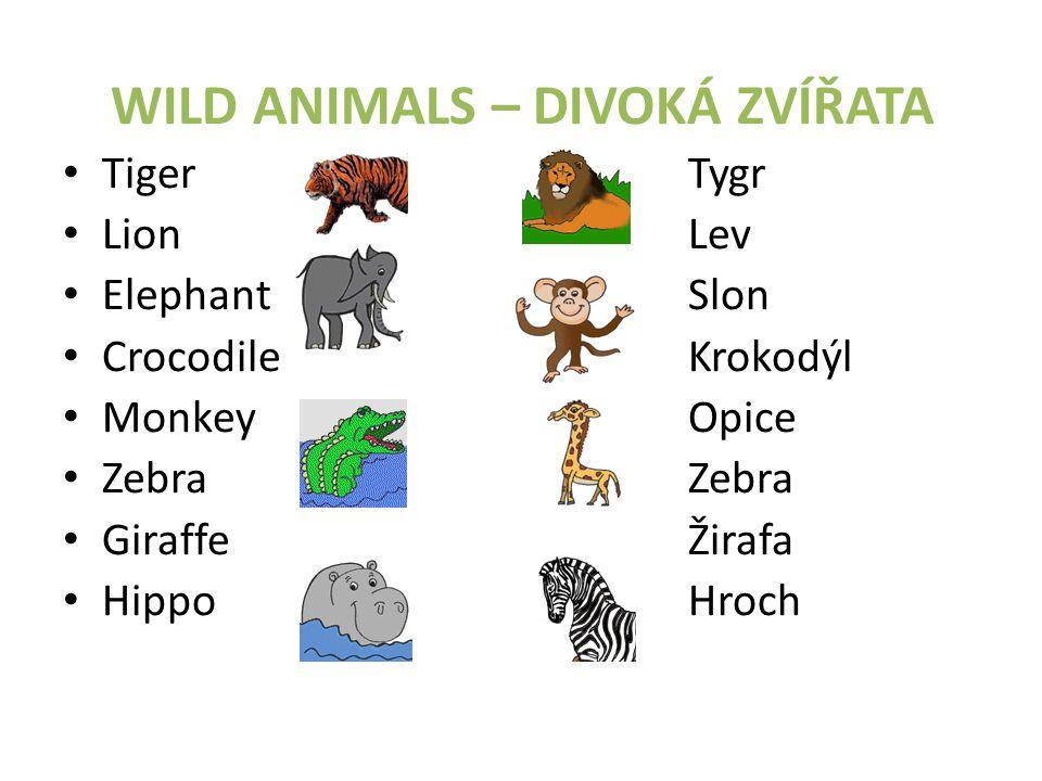 WILD ANIMALS – DIVOKÁ ZVÍŘATA