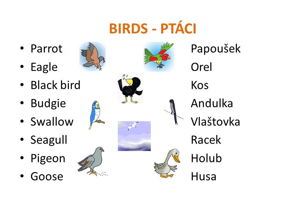BIRDS - PTÁCI Parrot Papoušek Eagle Orel Black bird Kos Budgie Andulka