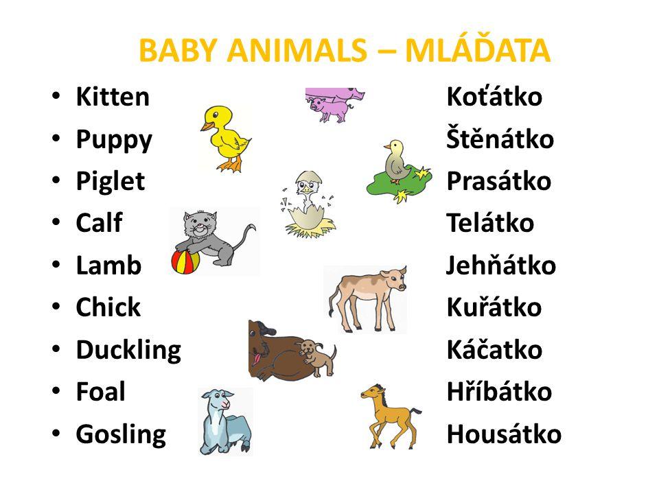 BABY ANIMALS – MLÁĎATA Kitten Koťátko Puppy Štěnátko Piglet Prasátko