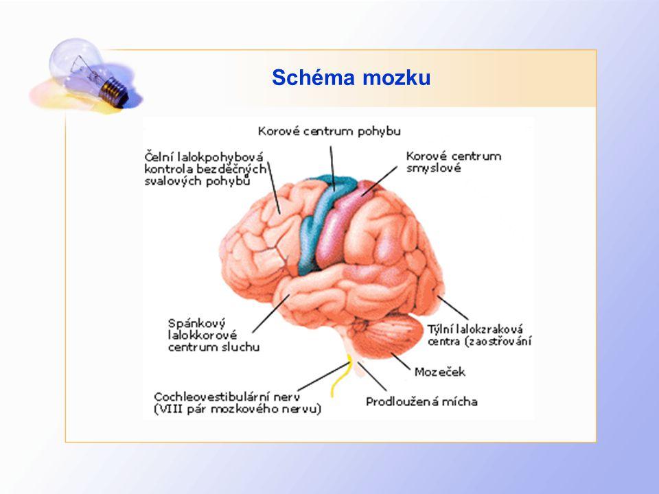 Schéma mozku