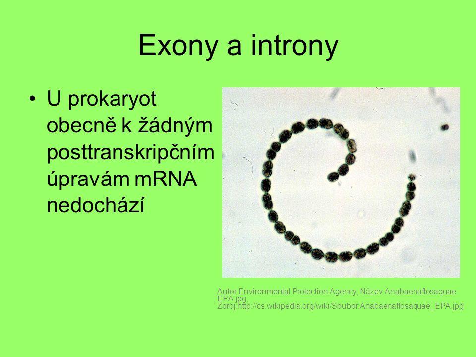 Exony a introny U prokaryot obecně k žádným posttranskripčním úpravám mRNA nedochází.