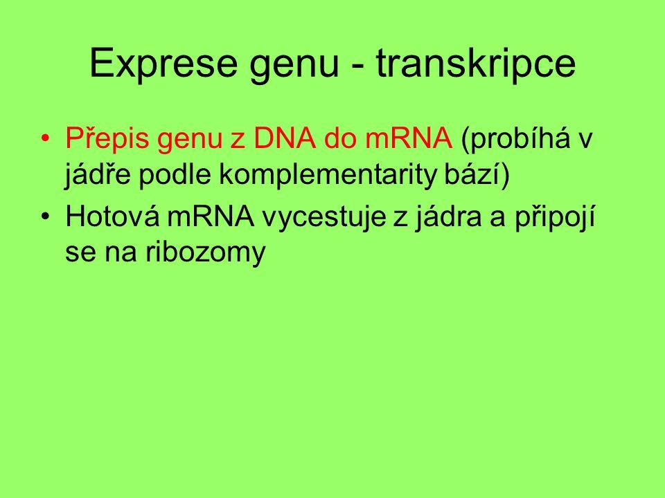 Exprese genu - transkripce
