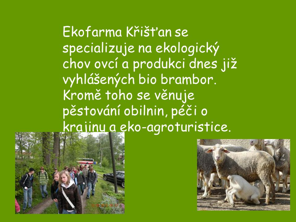 Ekofarma Křišťan se specializuje na ekologický chov ovcí a produkci dnes již vyhlášených bio brambor.