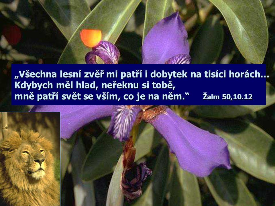 """""""Všechna lesní zvěř mi patří i dobytek na tisíci horách… Kdybych měl hlad, neřeknu si tobě, mně patří svět se vším, co je na něm. Žalm 50,10.12"""