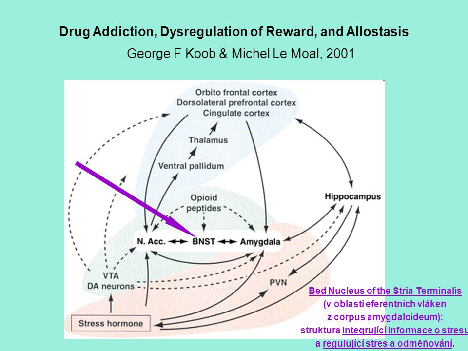 Drug Addiction, Dysregulation of Reward, and Allostasis George F Koob & Michel Le Moal, 2001