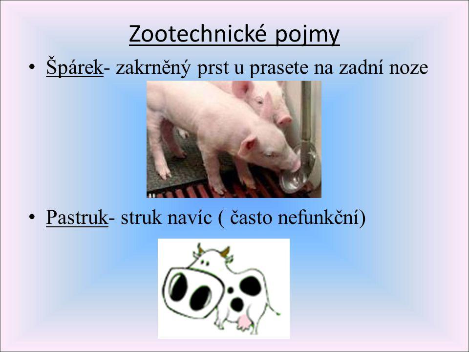 Zootechnické pojmy Špárek- zakrněný prst u prasete na zadní noze