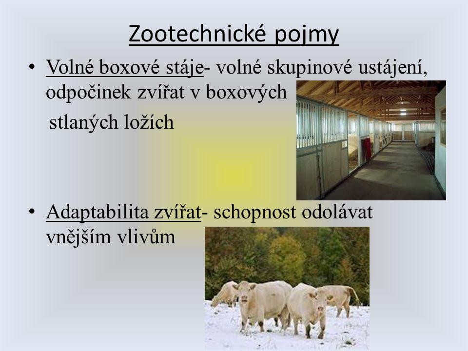 Zootechnické pojmy Volné boxové stáje- volné skupinové ustájení, odpočinek zvířat v boxových. stlaných ložích.