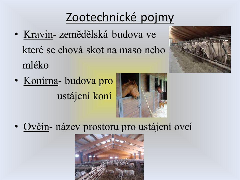 Zootechnické pojmy Kravín- zemědělská budova ve