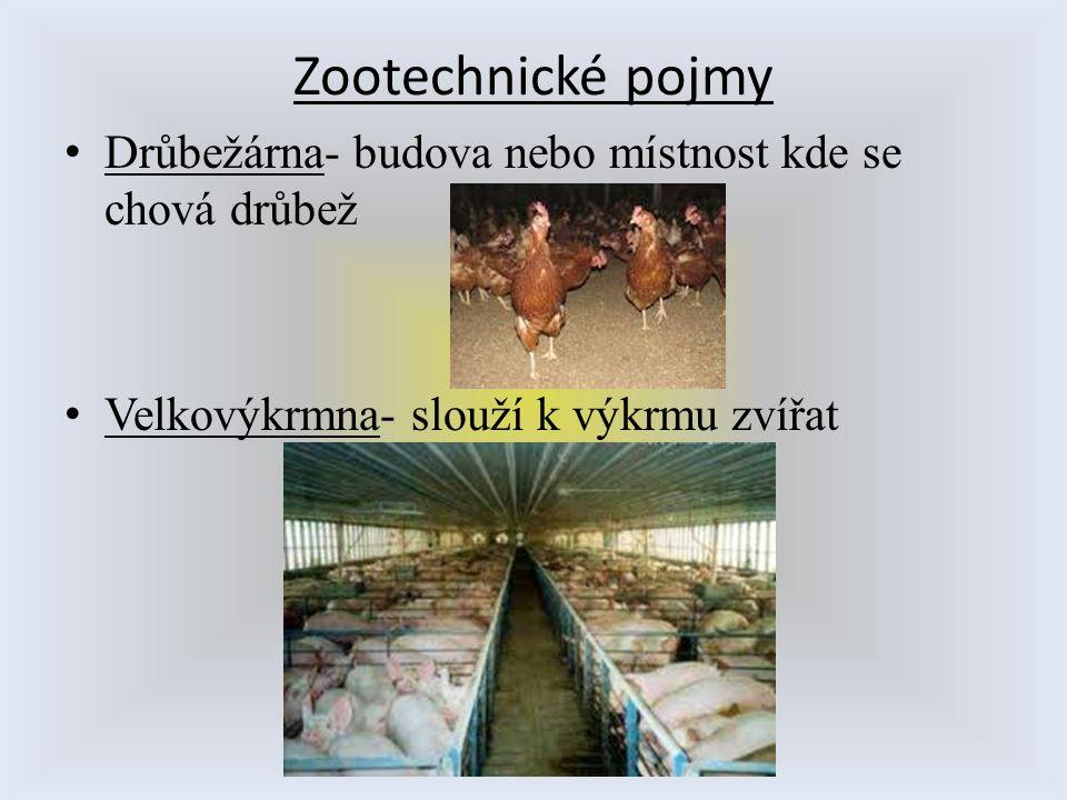 Zootechnické pojmy Drůbežárna- budova nebo místnost kde se chová drůbež.