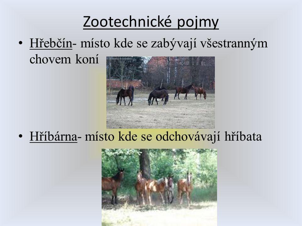 Zootechnické pojmy Hřebčín- místo kde se zabývají všestranným chovem koní.