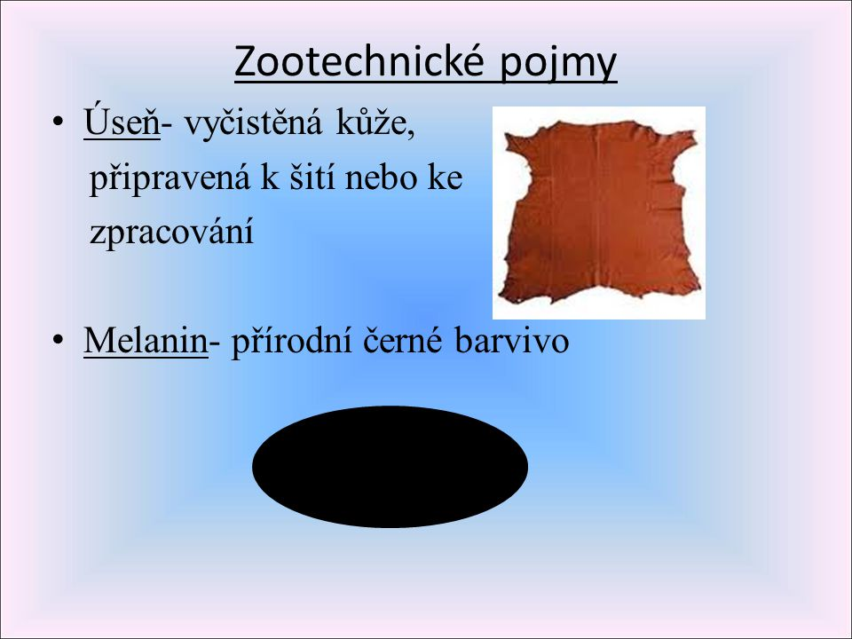 Zootechnické pojmy Úseň- vyčistěná kůže, připravená k šití nebo ke
