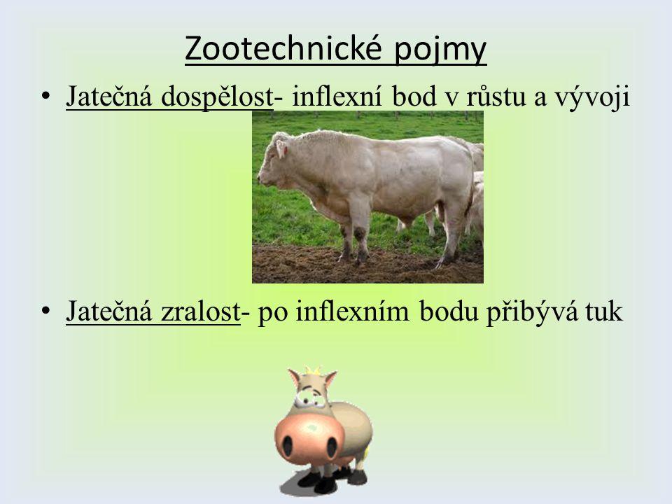 Zootechnické pojmy Jatečná dospělost- inflexní bod v růstu a vývoji