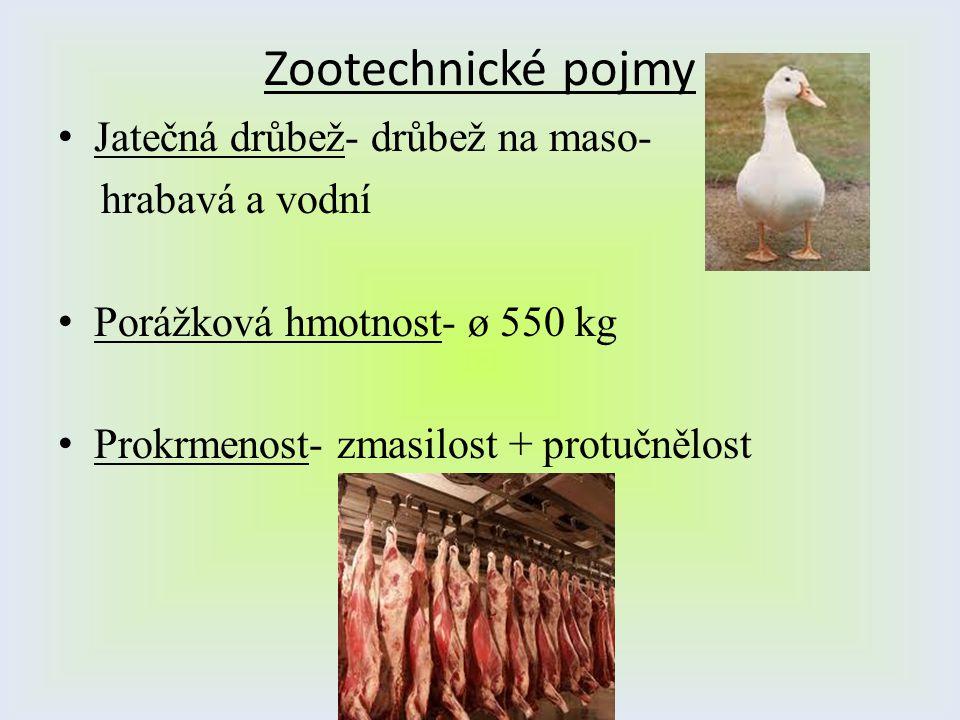 Zootechnické pojmy Jatečná drůbež- drůbež na maso- hrabavá a vodní