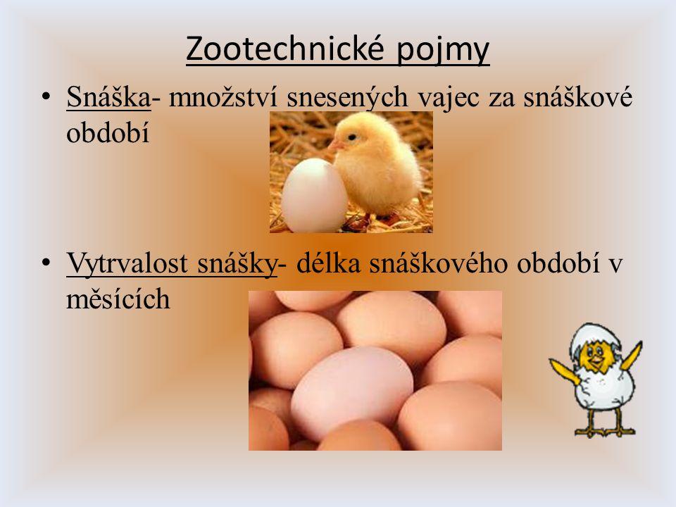 Zootechnické pojmy Snáška- množství snesených vajec za snáškové období