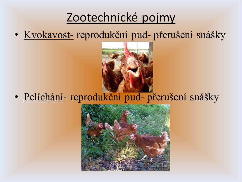 Zootechnické pojmy Kvokavost- reprodukční pud- přerušení snášky