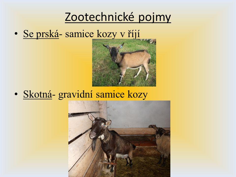 Zootechnické pojmy Se prská- samice kozy v říjí
