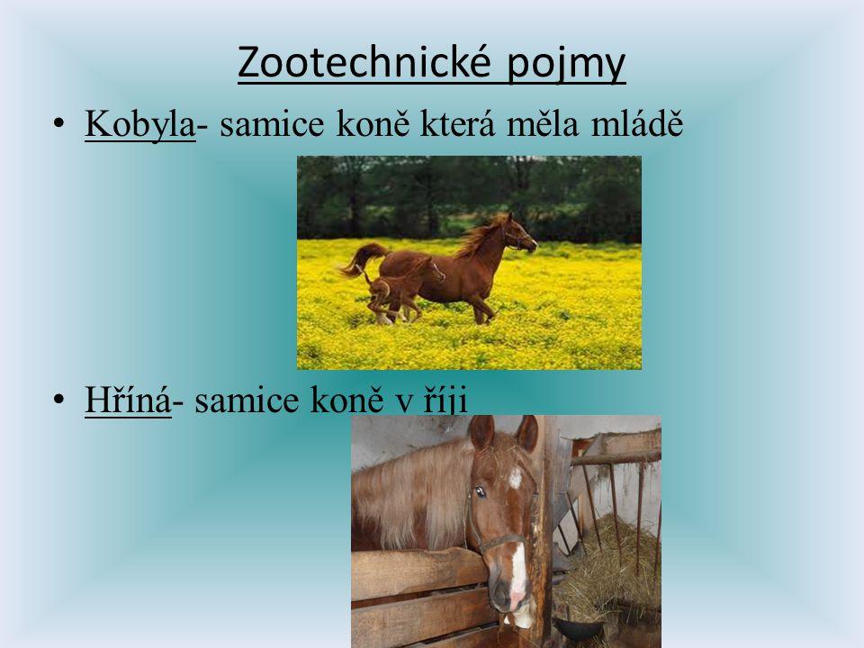 Zootechnické pojmy Kobyla- samice koně která měla mládě