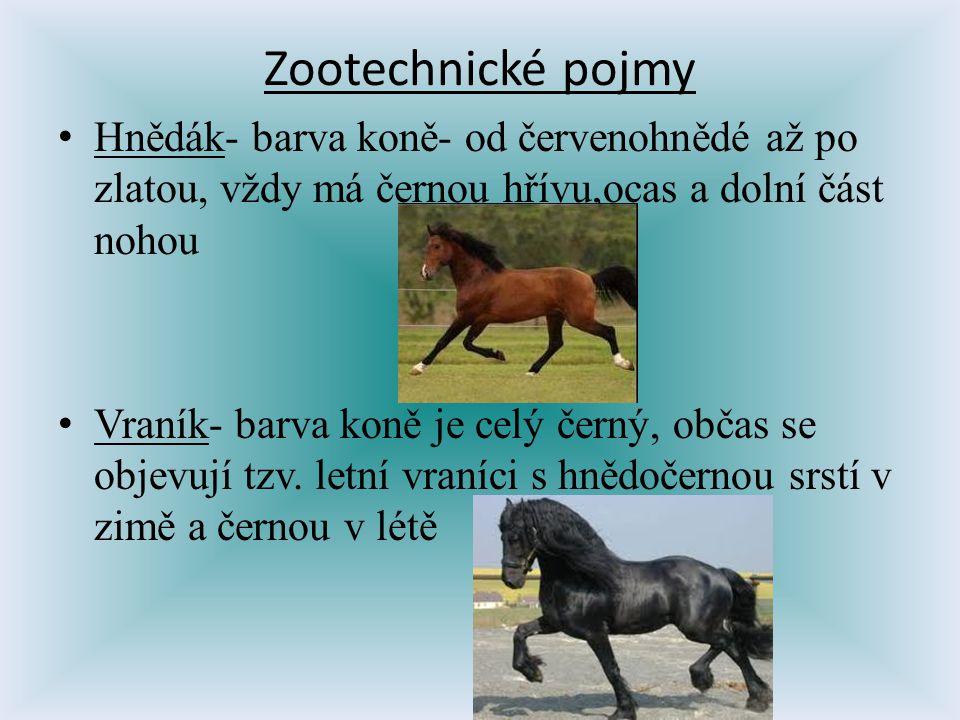 Zootechnické pojmy Hnědák- barva koně- od červenohnědé až po zlatou, vždy má černou hřívu,ocas a dolní část nohou.