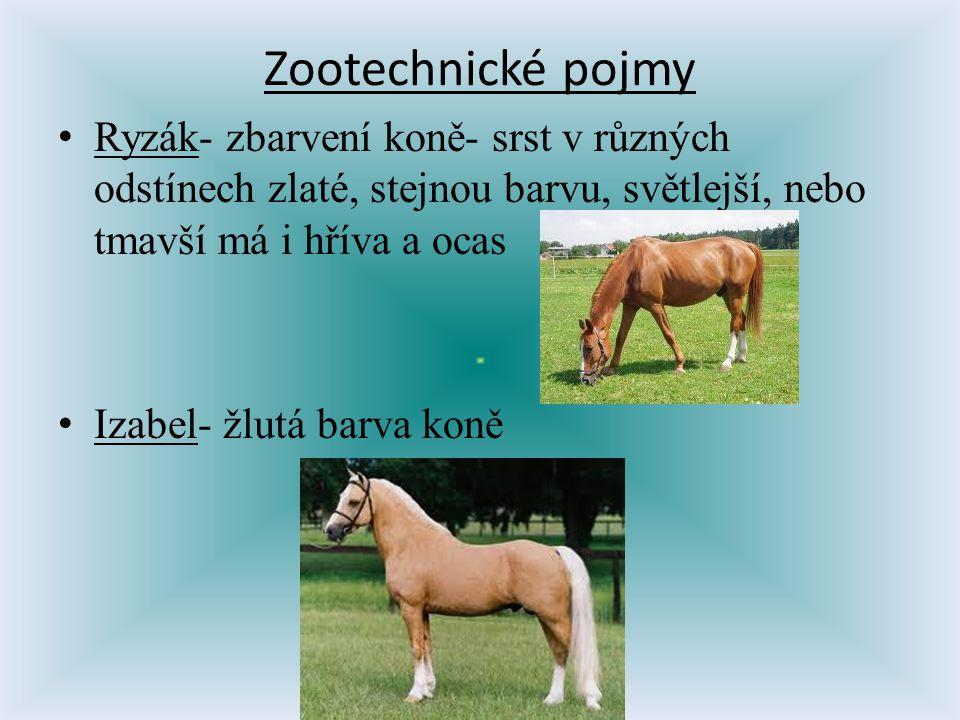 Zootechnické pojmy Ryzák- zbarvení koně- srst v různých odstínech zlaté, stejnou barvu, světlejší, nebo tmavší má i hříva a ocas.