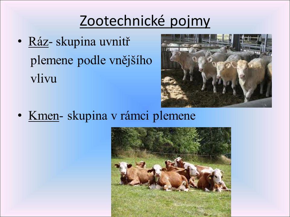 Zootechnické pojmy Ráz- skupina uvnitř plemene podle vnějšího vlivu