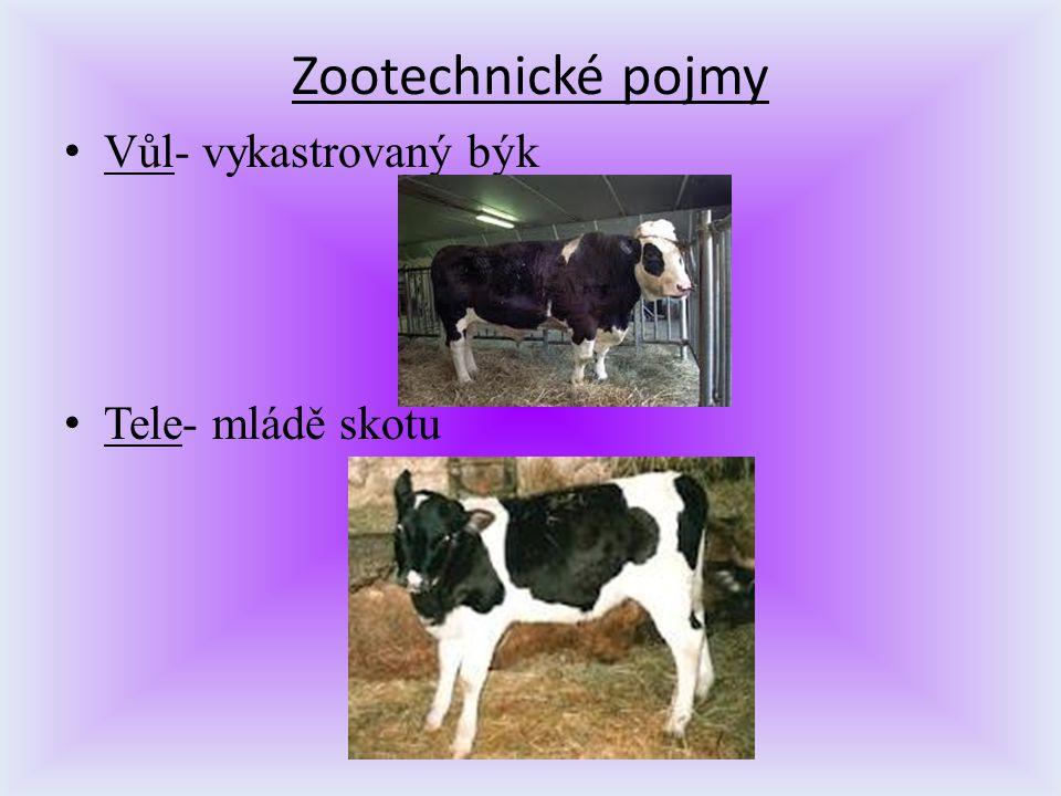 Zootechnické pojmy Vůl- vykastrovaný býk Tele- mládě skotu