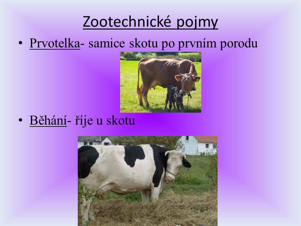 Zootechnické pojmy Prvotelka- samice skotu po prvním porodu